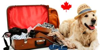 bringing pets into canada