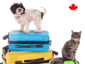 Pets Are Welcome in Canada